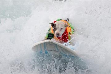 San Diego tendrá competencia de surf para perros