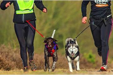 ¡A correr! Inscríbete a esta carrera y participa junto a tu perro