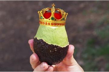 Ahora el aguacate es el manjar de los reyes, llega a $80 pesos