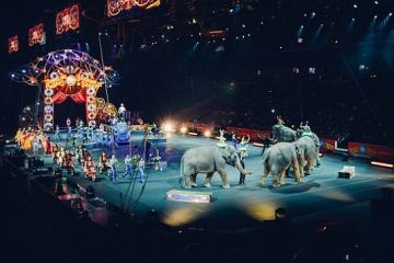 Circos alemanes siguen teniendo animales… holográficos