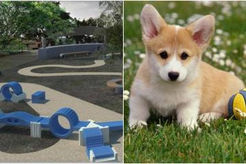 Crearán parque para perros en Tijuana