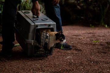 ¿Se quedarán con AMLO los gatos de Palacio Nacional?