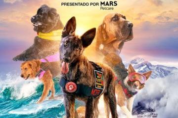 "Documental ""Perros superpoderosos"" llega al Cecut en julio"