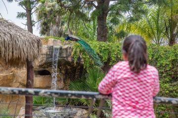 ¿En qué condiciones están los animales en el Parque Morelos de...