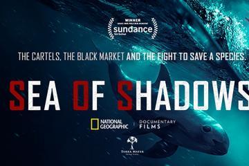 National Geographic proyectará documental sobre la Vaquita Marina...