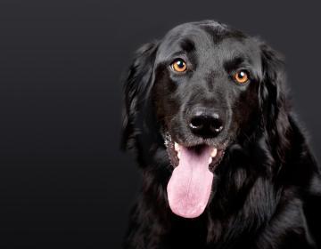 Estas son las razones por las que debes evitar que tu perro te lama