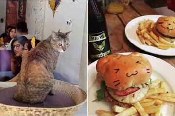 Catfecito, el local que cualquier amante de los gatos debe conocer