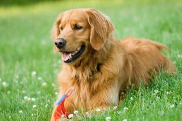 Ex modelo cansada de esperar al amor se casa con su perro