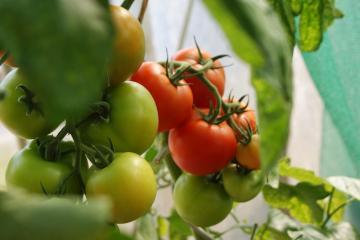 Aprende más sobre producción de agricultura orgánica en Simposio...