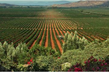 Promueven reglamento sustentable para el Valle de Guadalupe