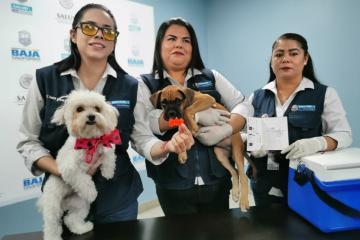 Esta es la semana de vacunación antirrábica en Baja California