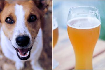 Rescue Me es una cerveza artesanal tijuanense que destina sus...
