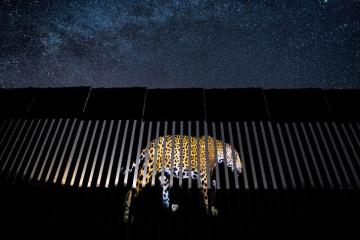 Mexicano gana premio en el Wildlife Photographer of the Year