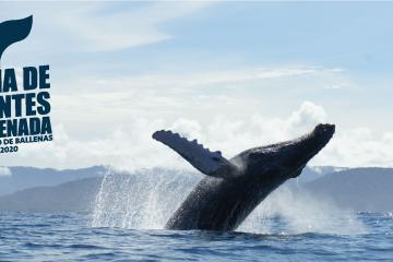 Asómbrate con el avistamiento de ballenas en Baja California 2020