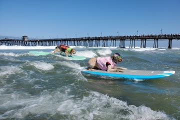 San Diego prepara competencia de surf para perros