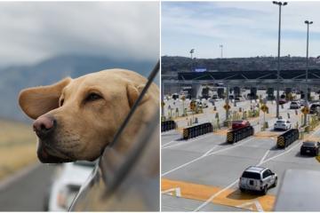 ¿Qué necesitas para cruzar a tu mascota de San Diego a Tijuana?