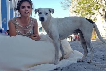 Perro de la calle posa junto a quinceañera en su sesión de fotos