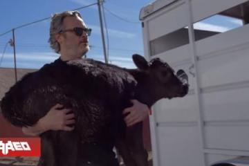 Joaquin Phoenix evita que maten a ternero y a su mamá