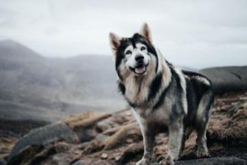 """Muere de cáncer perro que apareció como """"Summer"""" en..."""