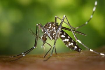 Mosquitos en California dan positivo a Virus del Nilo