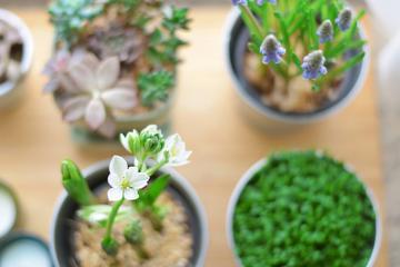 10 plantas que te ayudarán a aliviar tu estrés y ansiedad