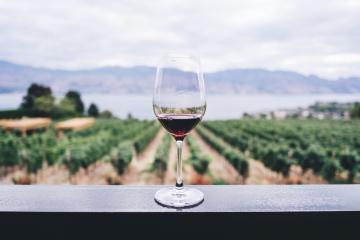 Valle de Guadalupe reabrió 20 vinícolas este fin de semana