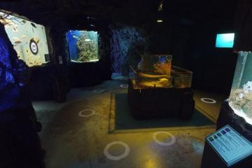 The CECUT has a new virtual tour: The aquarium!