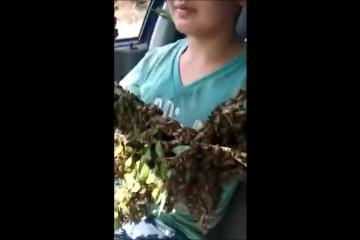 ¡Viajan en automóvil junto a enjambre de abejas!