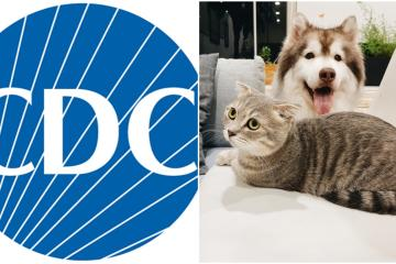 CDC emite recomendaciones para no propagar el coronavirus a mascotas