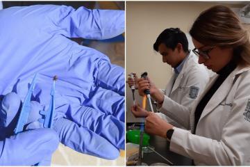 UABC busca desarrollar prueba rápida para detectar Rickettsia