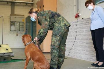 Entrenan a perros para detectar Covid-19 en saliva