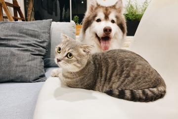 Inicia en Tijuana Jornada de Esterilización de perros y gatos