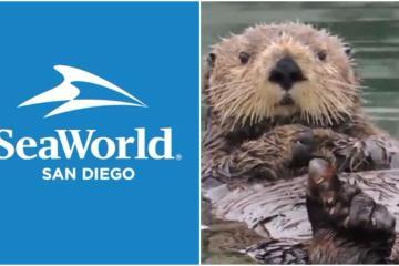 SeaWorld San Diego anuncia su reapertura