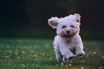 Rosarito podría tener un parque para perros