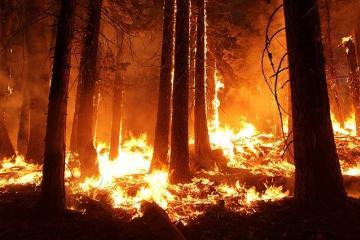 Terreno desconocido: Incendios en California