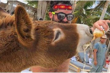 ¿Qué pasó con el burro que era emborrachado en hotel de Tulum?