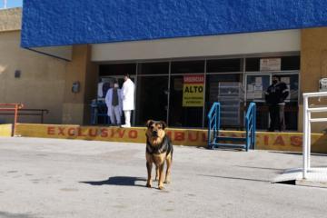 Covito: El perrito que espera a su dueño en las puertas del hospital
