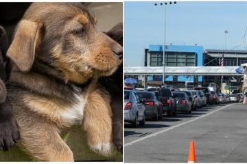4 puppies confiscated at Tijuana- San Diego border for illegal sale
