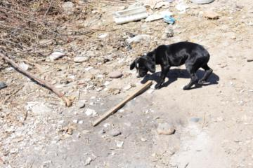 Rescatan a perro de un incendio en Tijuana