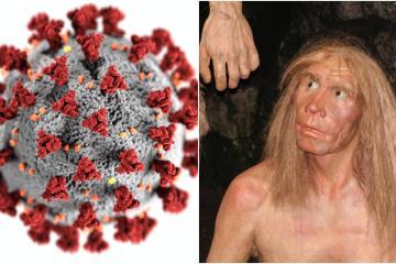 Herencia genética neandertal podría evitar contagios graves por...