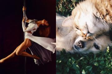 Pole Dance class to be offered in support of pets