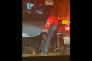 VIDEO: Repartidor acaricia a perrito callejero cuando esperaba el...