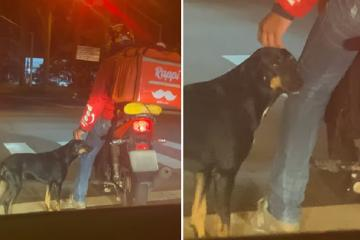 Viral: Repartidor de comida acaricia a perrito callejero mientras...