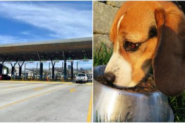 Find out how much dog food you can cross from San Diego to Tijuana...