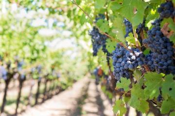 Estos son los condados de California con los mejores vinos