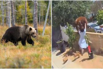 Viral: Joven de California salva a sus perros de ser atacados por...
