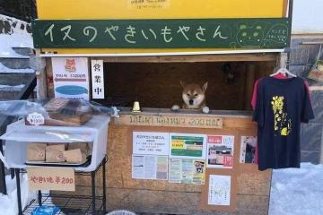 Murió Ken, el perrito de los memes que vendía camotes en Japón