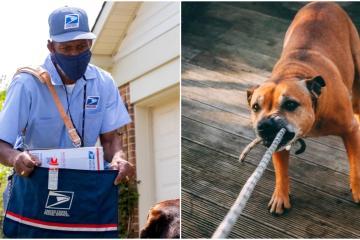 Servicio postal posiciona a perros de San Diego entre los peores...