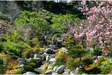 Jardín Japonés en Balboa Park te invita a festival tradicional...