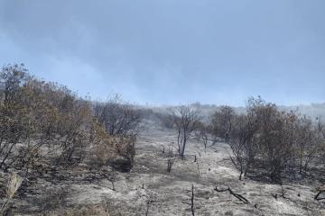 Prevén aumento del 65% en incendio forestales para Ensenada este 2021